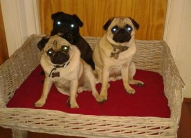 archie-treacle-and-monty